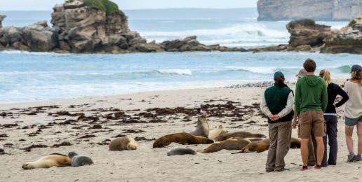 4-weekse rondreis door Zuidoost Australië vol activiteiten en afwisselende accommodaties