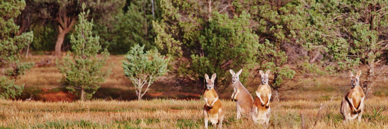 Reizen door Australiē met TravelEssence