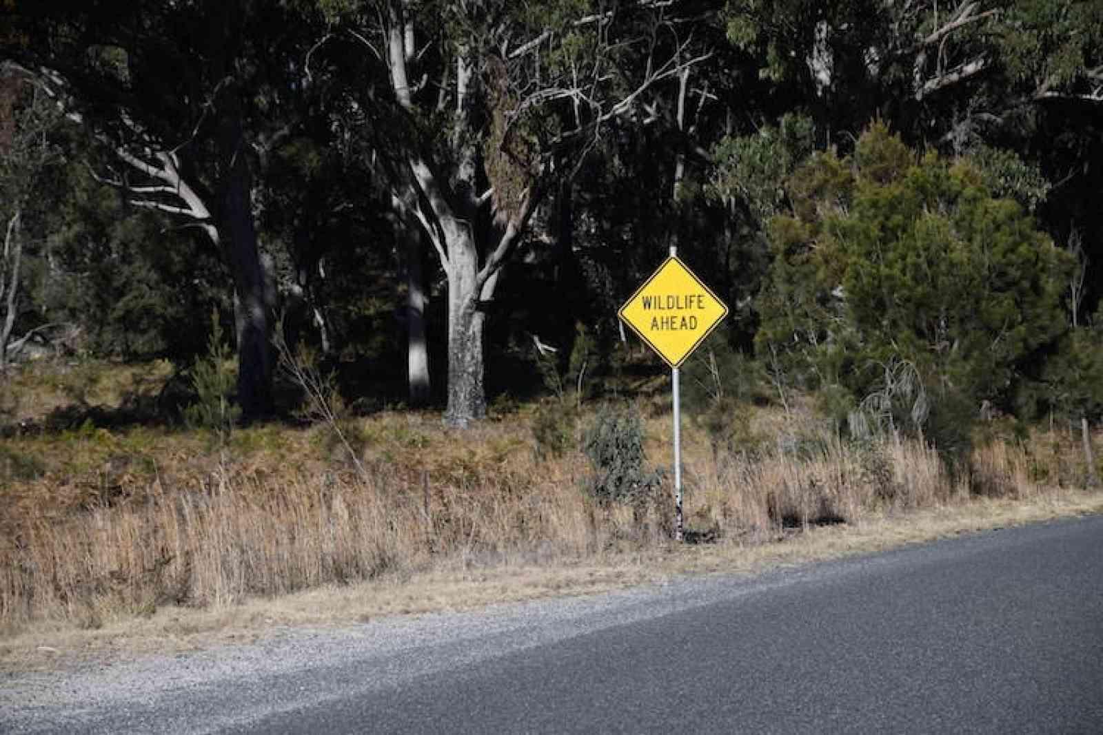 Abel in Australië: Dwaze weddenschappen en sterke verhalen in Tenterfield, Australië