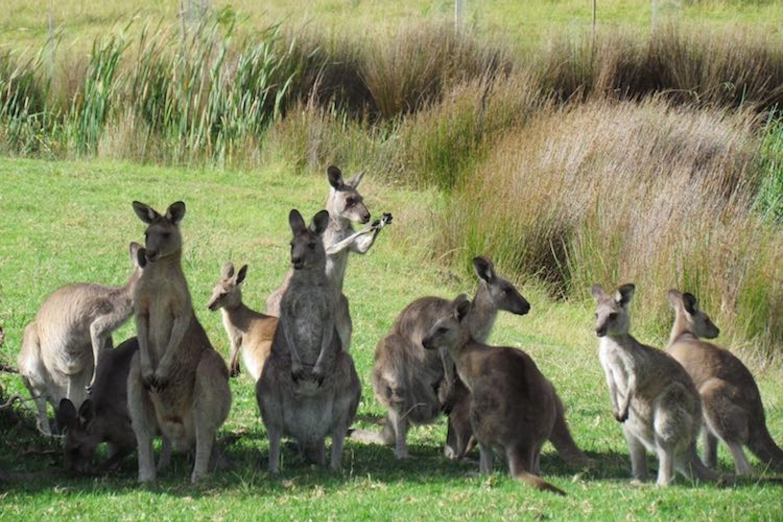 Auf dem Grundstück des Camps sind zahlreiche Kängurus, Wombats oder Opossums zu Hause und Sie werden oft das Lachen des Kookaburras hören.