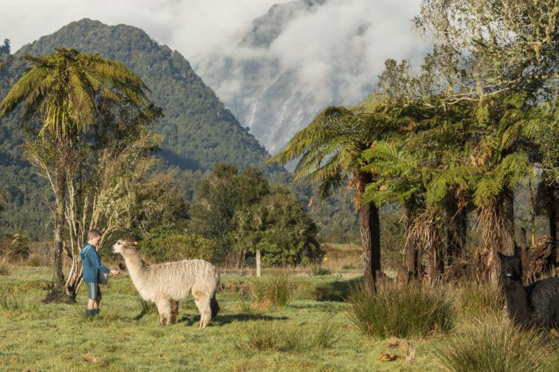 Glenfern Villas Alpaca
