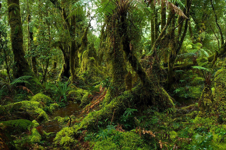 Der Fjordland Nationalpark ist Neuseelands größter Nationalpark und Weltnaturerbe