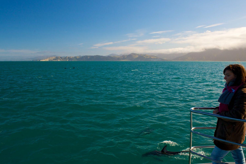 Kaikoura ist ein toller Ort, um Delfinen zu begegnen