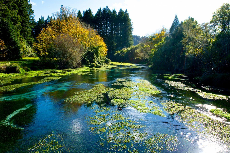 Hamurana Springs natürliche Quellen in Rotorua