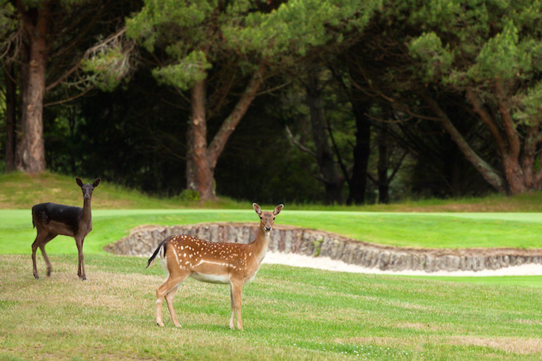 Een van de twintig mooiste golfbanen ter wereld