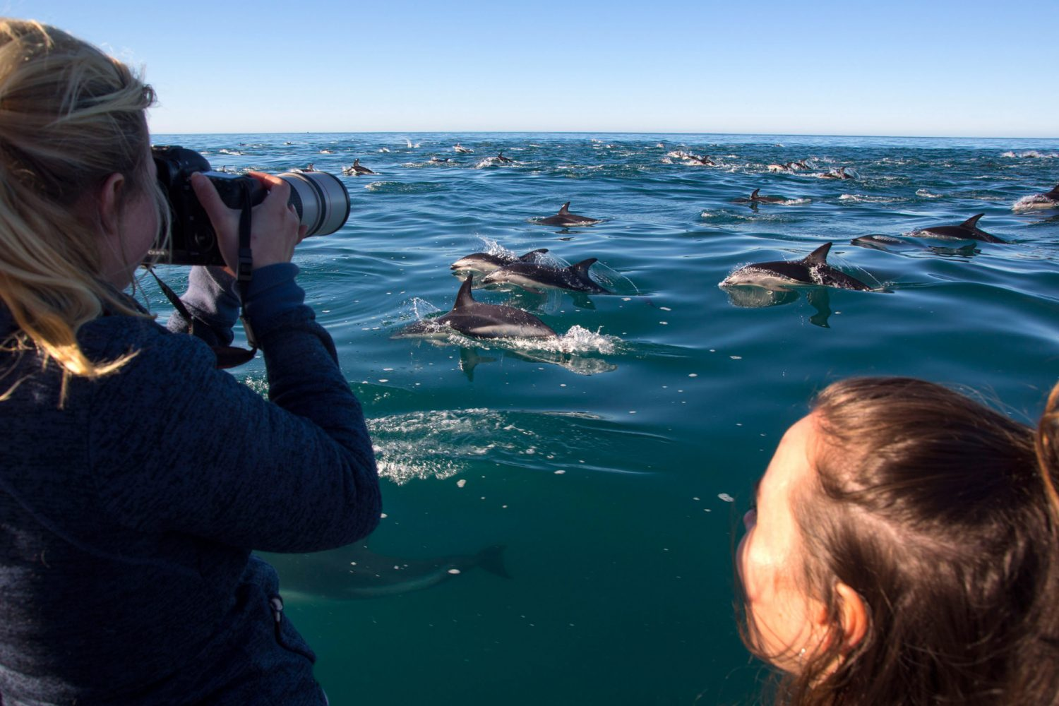 Dolphin Encounter in Kaikoura