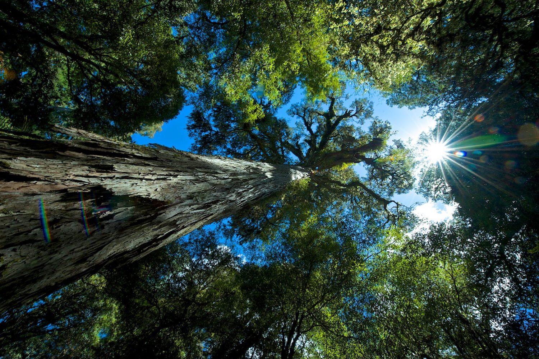 Neuseeland Rundreise Natur und Kultur: Te Urewera Regenwald mit Maori-Guide erleben