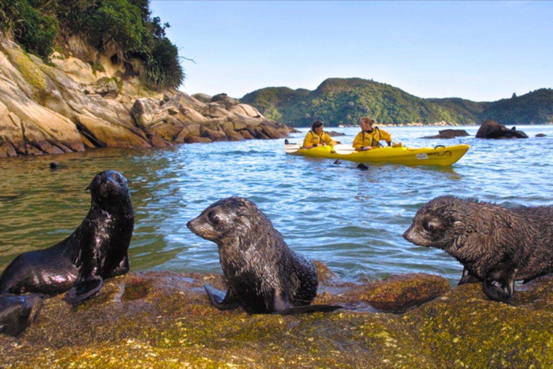 Abel Tasman Nationalpark: Robbensichtung auf einer Kajaktour